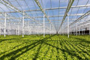 Lufa Farms Montreal