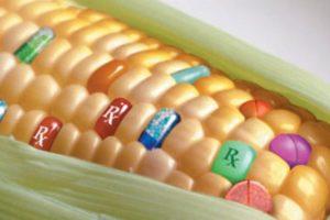 gmo food dangers