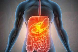 Human digestive system endotoxin