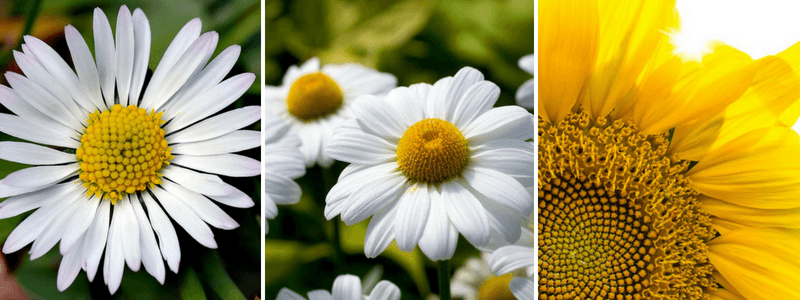 Sunflower-Spirals-compressor.png?profile=RESIZE_930x