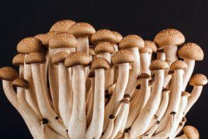 Mushrooms fungi save world