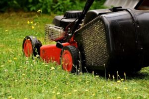 Lawn mower turf lawn alternatives