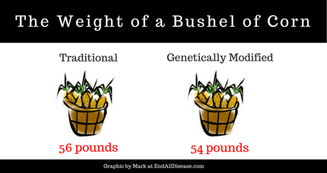 Comparing the weight of genetically modified food corn with Traditional Corn