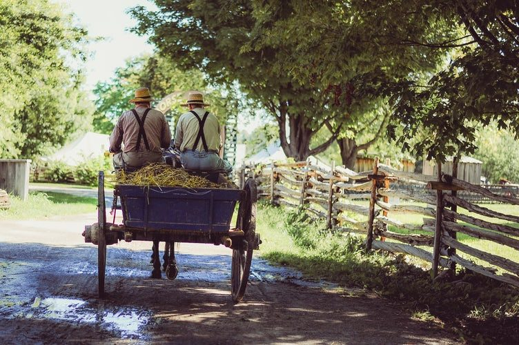 unvaccinated amish family riding horse-drawn carriage