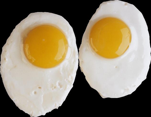 raw egg study digestion