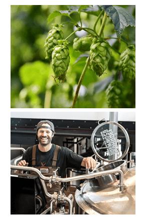 hops is estrogenic, beer, gruit
